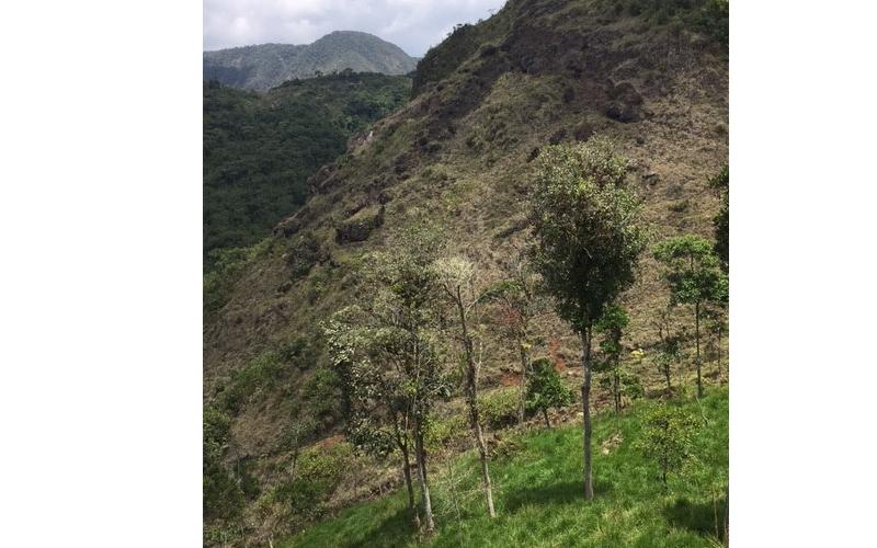 Zinc One realizará estimación de recursos en Bongará a inicios de 2019